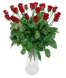 Adana çiçek yolla çiçekçi telefonları  11 adet kimizi gülün ihtisami cam yada mika vazo modeli