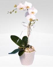 1 dallı orkide saksı çiçeği  Adana çiçek siparişi online çiçekçi , çiçek siparişi