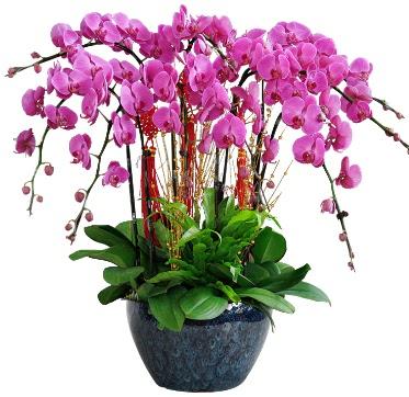 9 dallı mor orkide  Adana çiçek siparişi 14 şubat sevgililer günü çiçek