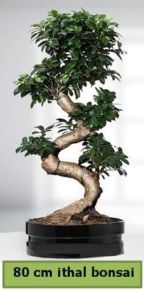80 cm özel saksıda bonsai bitkisi  Adana çiçek yolla çiçekçi telefonları