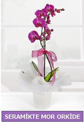 Seramik içerisinde birinci kalite tek dallı mor orkide  Adana çiçek yolla İnternetten çiçek siparişi