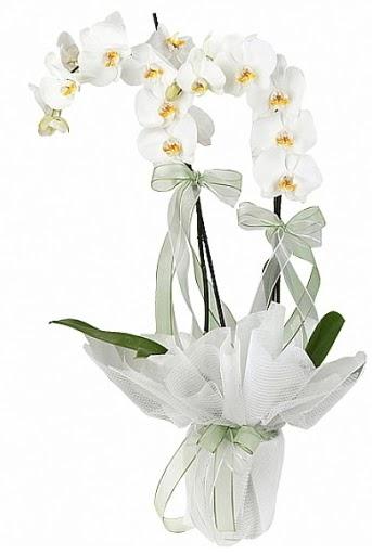 Çift Dallı Beyaz Orkide  Adana çiçek siparişi anneler günü çiçek yolla