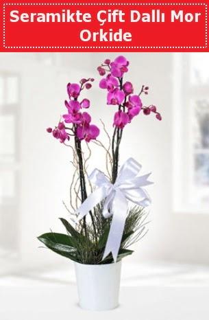 Seramikte Çift Dallı Mor Orkide  Adana çiçek siparişi anneler günü çiçek yolla