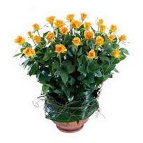 Adana çiçek siparişi cicekciler , cicek siparisi  10 adet sari gül tanzim cam yada mika vazoda çiçek