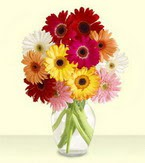 Adana çiçek siparişi çiçek yolla , çiçek gönder , çiçekçi   cam yada mika vazoda 15 özel gerbera