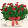 Adana çiçek yolla İnternetten çiçek siparişi  11 adet kirmizi gül sepette