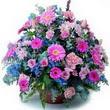 karisik mevsim kir çiçekleri  Adana çiçek yolla çiçek gönderme sitemiz güvenlidir