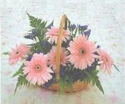 gerbera çiçeklerinde sepet   Adana çiçek yolla çiçek yolla