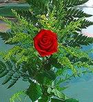 1 adet kirmizi gül buketi   Adana çiçek siparişi çiçek siparişi vermek