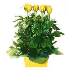 11 adet sari gül aranjmani  Adana çiçek siparişi online çiçekçi , çiçek siparişi