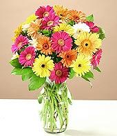 Adana çiçek siparişi çiçek online çiçek siparişi  17 adet karisik gerbera