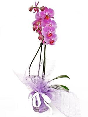 Adana çiçek siparişi anneler günü çiçek yolla  Kaliteli ithal saksida orkide