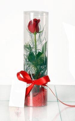 Adana çiçek yolla çiçek yolla  Silindir vazoda tek kirmizi gül