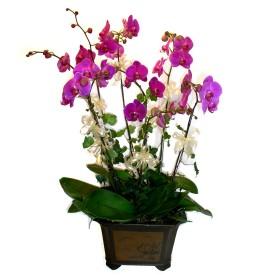 Adana çiçek siparişi cicek , cicekci  4 adet orkide çiçegi