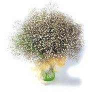 Adana çiçek siparişi çiçek mağazası , çiçekçi adresleri  cam yada mika vazo içerisinde cipsofilya demeti