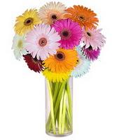 Adana çiçek siparişi internetten çiçek siparişi  Farkli renklerde 15 adet gerbera çiçegi