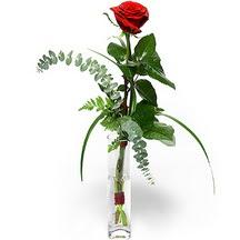 Adana çiçek siparişi 14 şubat sevgililer günü çiçek  Sana deger veriyorum bir adet gül cam yada mika vazoda