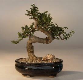 ithal bonsai saksi çiçegi  Adana çiçek siparişi 14 şubat sevgililer günü çiçek