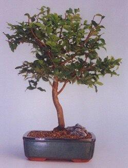 Adana çiçek gönder ucuz çiçek gönder  ithal bonsai saksi çiçegi  Adana çiçek siparişi anneler günü çiçek yolla