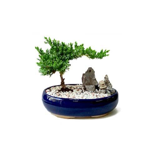 ithal bonsai saksi çiçegi  Adana çiçek yolla çiçek gönderme