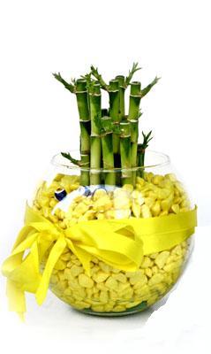 cam fanus içerisinde bambo  Adana çiçek gönder internetten çiçek satışı