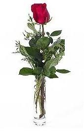 Vazo içerisinde 1 adet kirmizi gül  Adana çiçek siparişi cicekciler , cicek siparisi