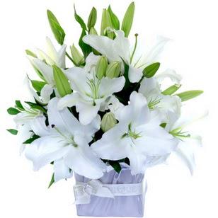 Adana çiçek yolla çiçek yolla  2 dal cazablanca vazo çiçeği