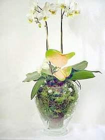 Adana çiçek yolla çiçek satışı  Cam yada mika vazoda özel orkideler