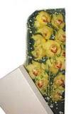 Adana çiçek yolla çiçek gönderme  Kutu içerisine dal cymbidium orkide
