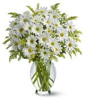 Vazo içerisinde beyaz krizantem çiçekleri  Adana çiçek gönder çiçekçi mağazası