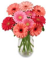 vazo içerisinde 13 adet gerbera çiçeği  Adana çiçek gönder çiçek siparişi sitesi