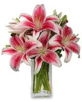 Vazo içerisinde 5 dal kazablanka çiçeği  Adana çiçek siparişi cicekciler , cicek siparisi