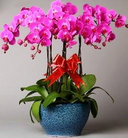 7 dallı mor orkide  Adana çiçek siparişi çiçek online çiçek siparişi