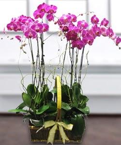 4 dallı mor orkide  Adana çiçek siparişi güvenli kaliteli hızlı çiçek