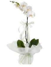 1 dal beyaz orkide çiçeği  Adana çiçek siparişi çiçek siparişi vermek
