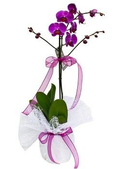 Tek dallı mor orkide  Adana çiçek yolla çiçekçi telefonları