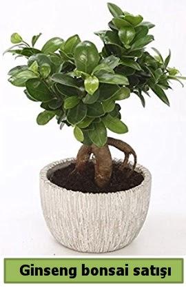 Ginseng bonsai japon ağacı satışı  Adana çiçek yolla çiçekçi telefonları