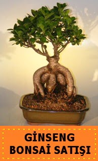 Ginseng bonsai satışı japon ağacı  Adana çiçek siparişi cicek , cicekci