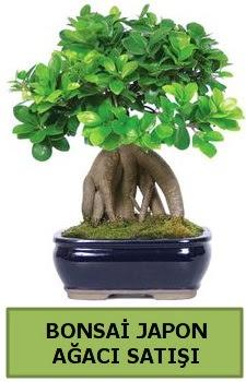 Bonsai japon ağacı satışı  Adana çiçek yolla çiçek satışı