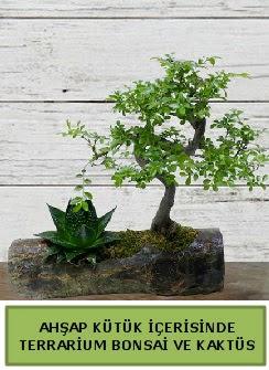 Ahşap kütük bonsai kaktüs teraryum  Adana çiçek siparişi internetten çiçek siparişi