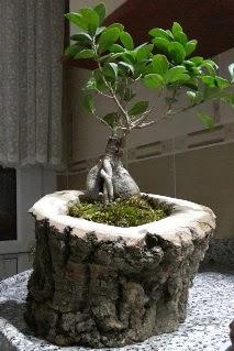 Ahşap kütük içerisinde ginseng bonsai  Adana çiçek siparişi internetten çiçek siparişi