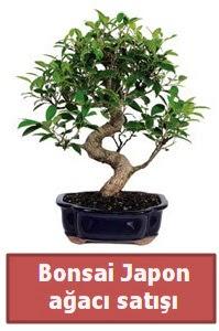 Japon ağacı bonsai satışı  Adana çiçek gönder çiçek siparişi sitesi