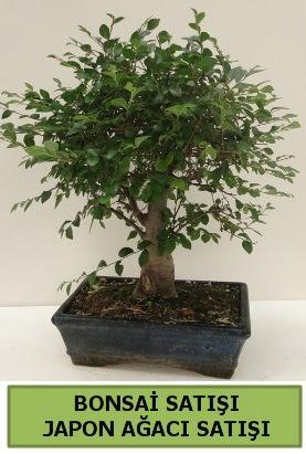 Minyatür bonsai japon ağacı satışı  Adana çiçek yolla çiçek gönderme sitemiz güvenlidir