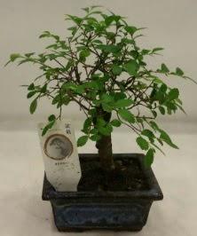 Minyatür ithal japon ağacı bonsai bitkisi  Adana çiçek yolla çiçek satışı