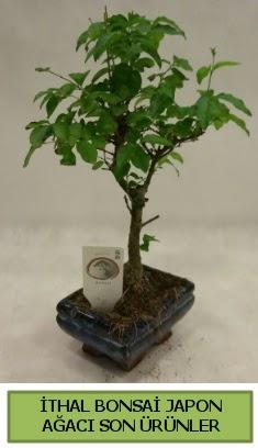İthal bonsai japon ağacı bitkisi  Adana çiçek siparişi hediye sevgilime hediye çiçek