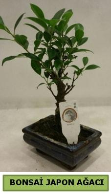 Bonsai japon ağacı saksı bitkisi  Adana çiçek siparişi çiçek servisi , çiçekçi adresleri