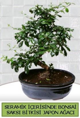 Seramik vazoda bonsai japon ağacı bitkisi  Adana çiçek gönder çiçek siparişi sitesi