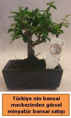 Japon ağacı bonsai satışı ithal görsel  Adana çiçek yolla çiçek yolla