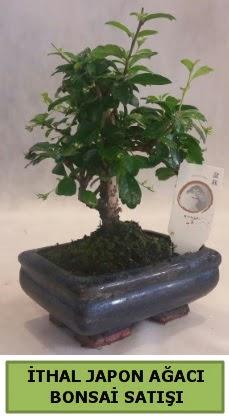 İthal japon ağacı bonsai bitkisi satışı  Adana çiçek yolla çiçekçi telefonları