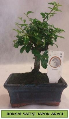 Minyatür bonsai ağacı satışı  Adana çiçek yolla çiçek gönderme